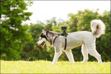 Sony-action-cam-perro
