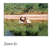 zoom-5