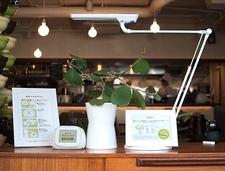 Una planta cuenta en un blog sus experiencias