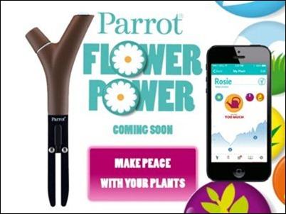 parrot-flower