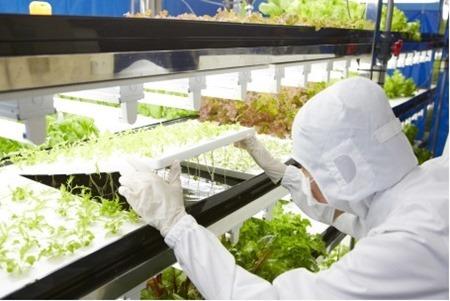 Verduras Toshiba