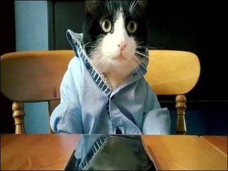 Video con gatos gana concurso viral de Nokia Lumia